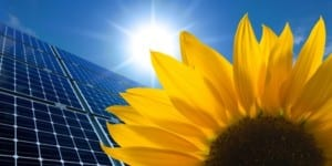 solar panels and sunflower